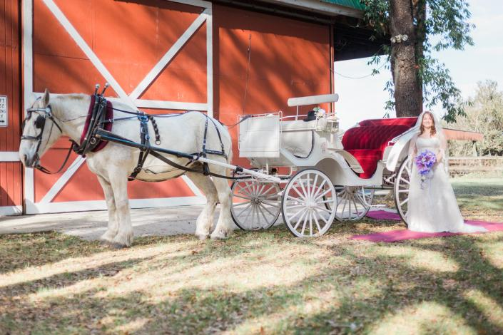 Horse carriage, credit Edward Lian Photography